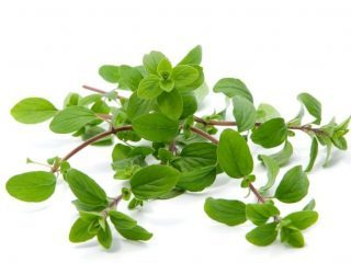 Aroma of the Month for June: Marjoram