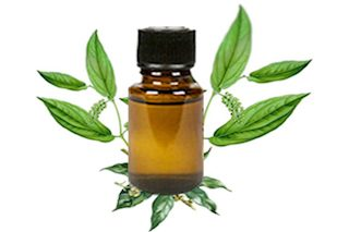 Aromatherapy Oil of the Month June – Camphor