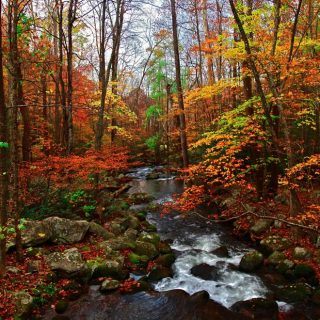 Autumn – the season of the Metal Element in Traditional Chinese Medicine