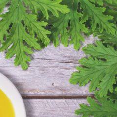 Victoria Lily's oil for February –  Citronella